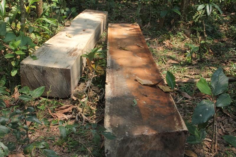 Quảng Nam yêu cầu điều tra rừng phòng hộ bị phá - ảnh 4
