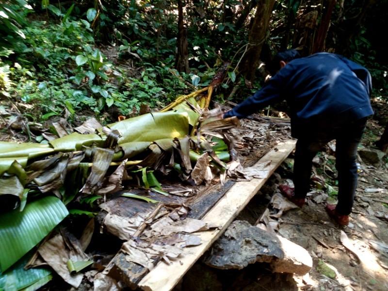 Quảng Nam yêu cầu điều tra rừng phòng hộ bị phá - ảnh 3