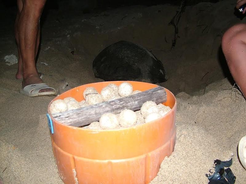 Đề nghị khởi tố vụ án trộm 1.480 trứng rùa biển  - ảnh 1