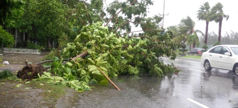 Bão số 3 áp sát, cây gãy đổ la liệt trên đường phố Đà Nẵng  - ảnh 7