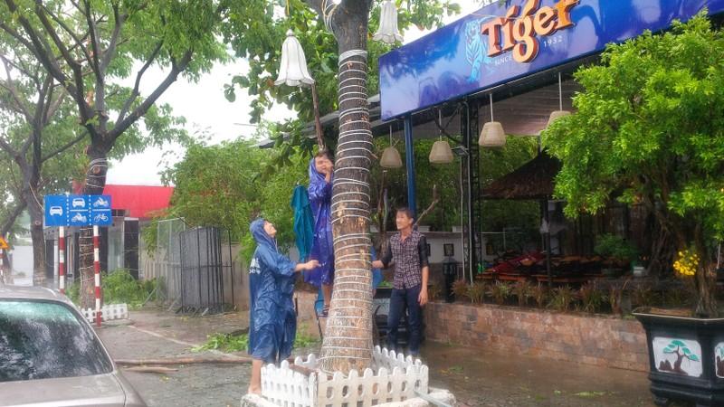Bão số 3 áp sát, cây gãy đổ la liệt trên đường phố Đà Nẵng  - ảnh 6