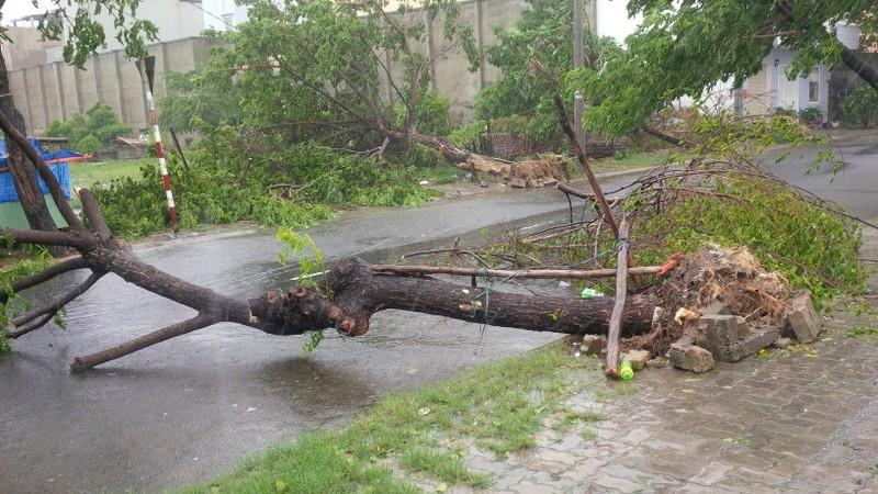 Bão số 3 áp sát, cây gãy đổ la liệt trên đường phố Đà Nẵng  - ảnh 5