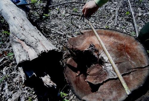 Tịch thu, xử phạt 25 triệu đồng gỗ lậu vận chuyển trái phép - ảnh 1
