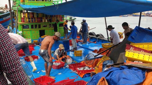 Đà Nẵng: 'Nước biển bình thường cứ vô tư tắm'! - ảnh 2