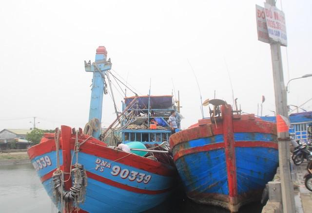 Đà Nẵng: Ngư dân, tiểu thương lao đao vì thông tin cá nhiễm độc - ảnh 1