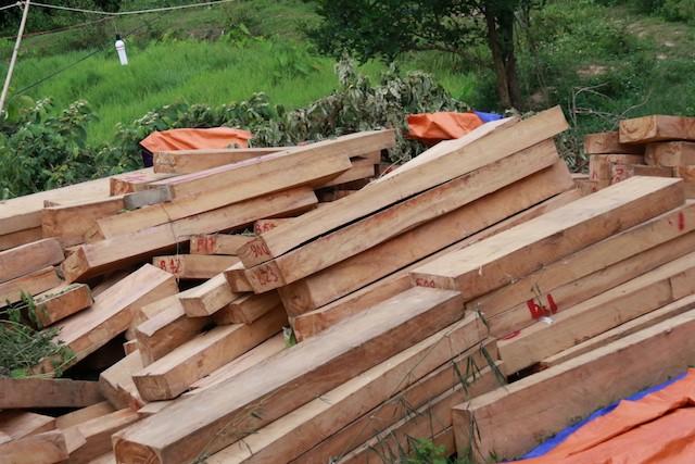 Vụ phá rừng pơ mu: Có dấu hiệu bao che, dung túng  - ảnh 1