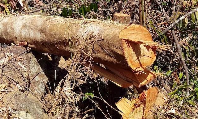 Quảng Nam: Bắt 3 nghi can phá rừng - ảnh 1
