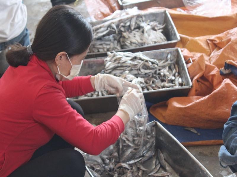 Tiêu hủy 20 tấn cá nục nhiễm phenol ở Quảng Trị - ảnh 1