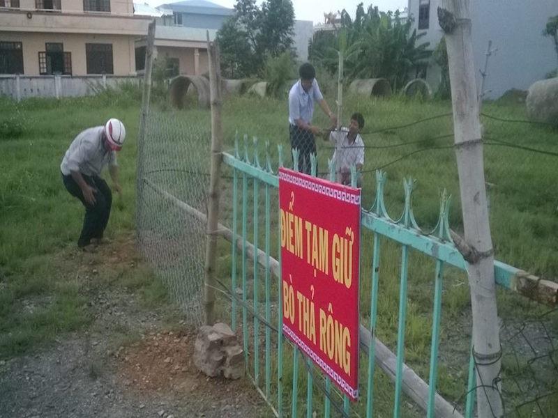Lập 'trại tạm giữ' bò đi rông quậy phá phố phường - ảnh 1