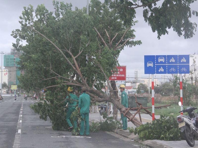 Công nhân cây xanh khắc phục sự cố cây gãy đổ sau bão