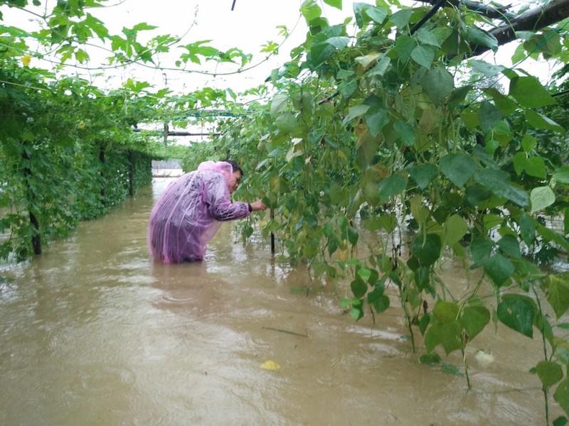 Quảng Nam: Hết ăn tết vì lũ vùi - ảnh 1