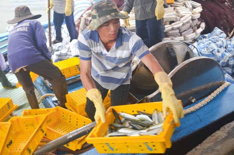 Ngư dân Quảng Ngãi trúng đậm cá biển đầu năm - ảnh 5