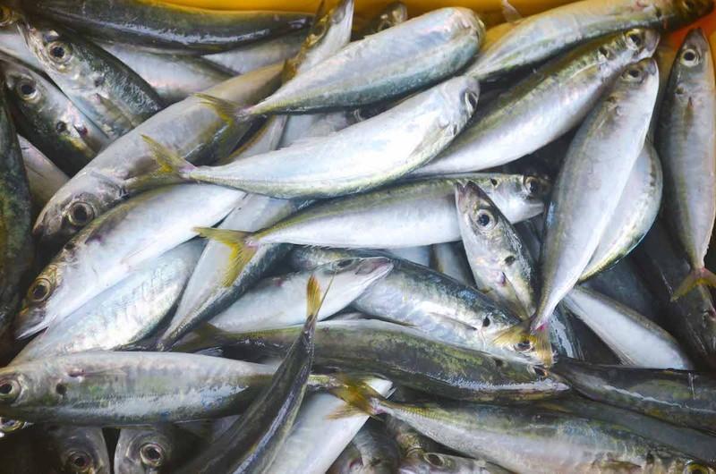 Ngư dân Quảng Ngãi trúng đậm cá biển đầu năm - ảnh 2