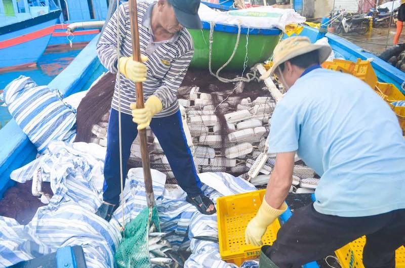 Ngư dân Quảng Ngãi trúng đậm cá biển đầu năm - ảnh 4