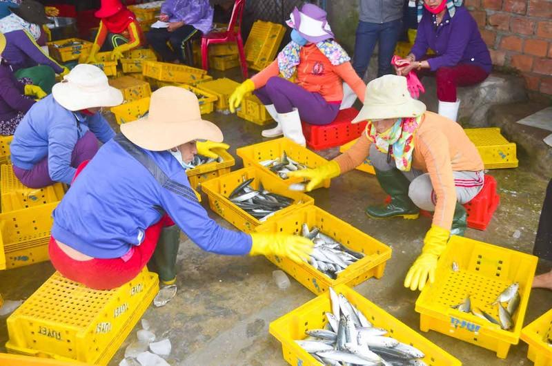 Ngư dân Quảng Ngãi trúng đậm cá biển đầu năm - ảnh 6