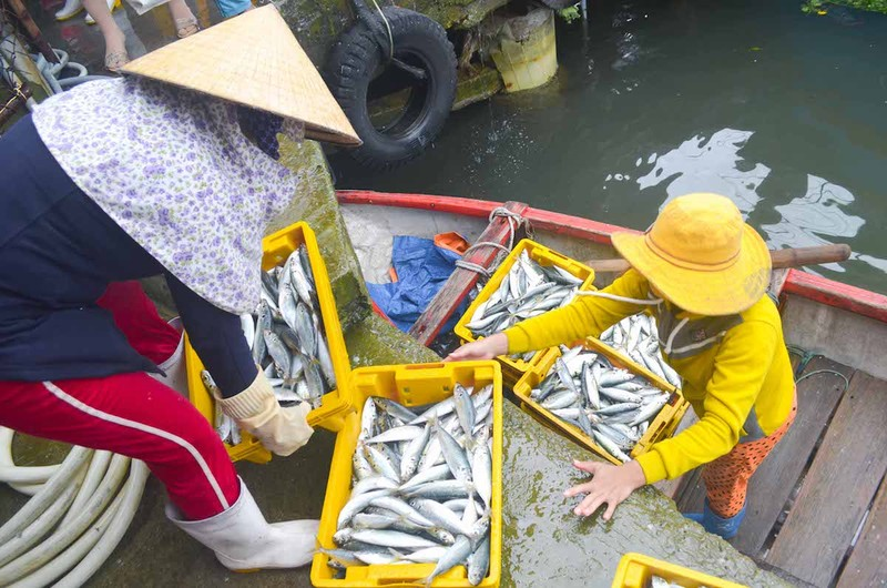 Ngư dân Quảng Ngãi trúng đậm cá biển đầu năm - ảnh 11