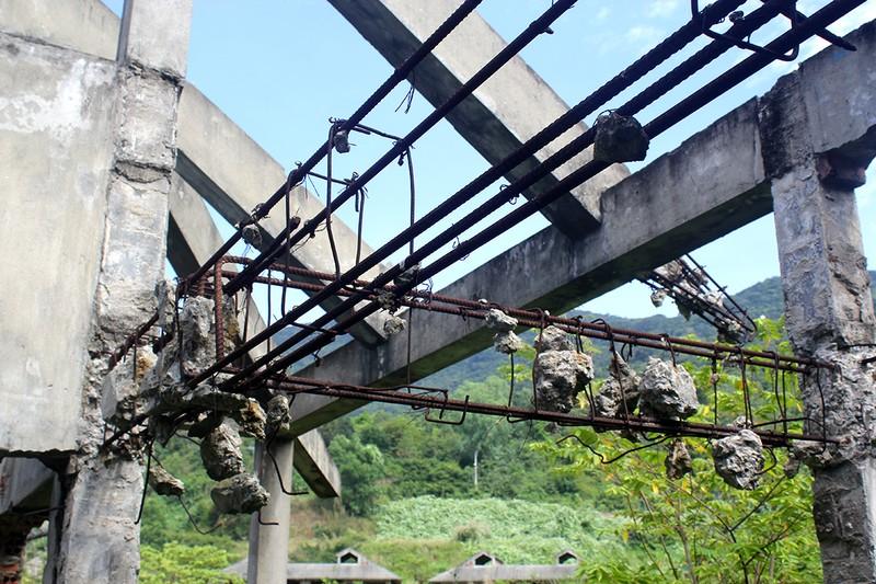 Hàng chục biệt thự cực đẹp bị bỏ hoang tại Sơn Trà - ảnh 4