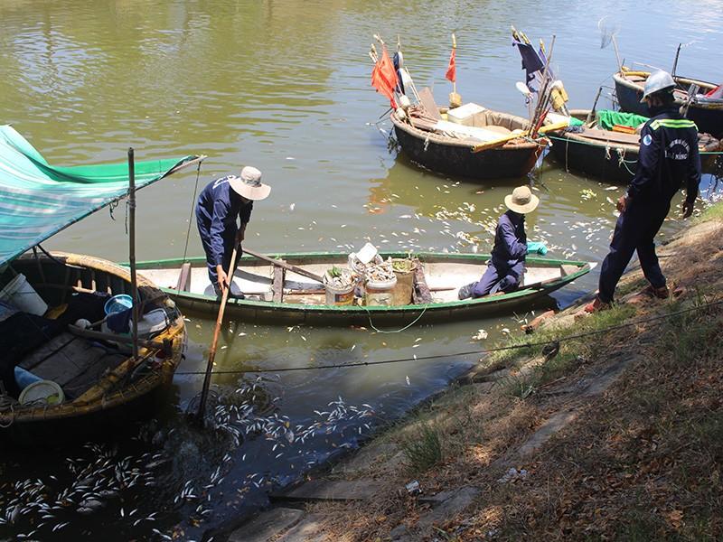 Sáng ra thấy cá chết trắng kênh Phú Lộc - ảnh 2