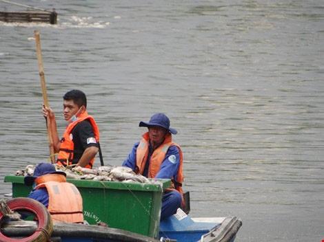 UBND TP chỉ đạo khắc phục tình trạng cá chết ở kênh Nhiêu Lộc  - ảnh 2