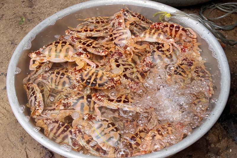 'Chảy nước miếng' với chợ hải sản ở Hồ Tràm - ảnh 12