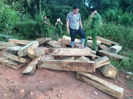 Tạm đình chỉ công tác một chi cục trưởng Hải quan ở Quảng Nam - ảnh 1