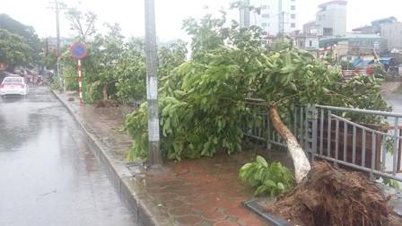 EVN cảnh báo nguy hiểm do bão số 1 gây tổn hại lưới điện - ảnh 4