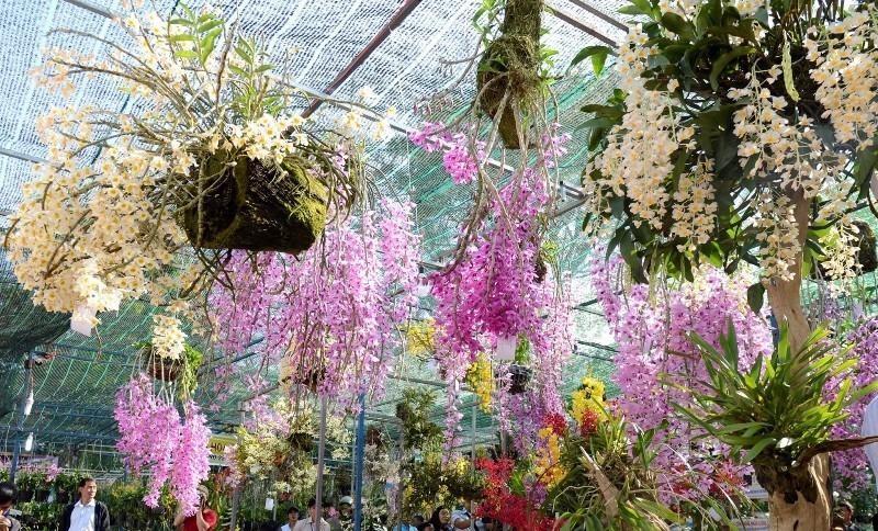 Những giống lan đến từ nhiều vùng miền của Việt Nam