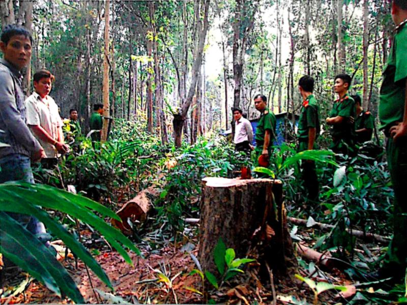 Công an đào gỗ trắc nặng 450kg, thi hành án để mất  - ảnh 1