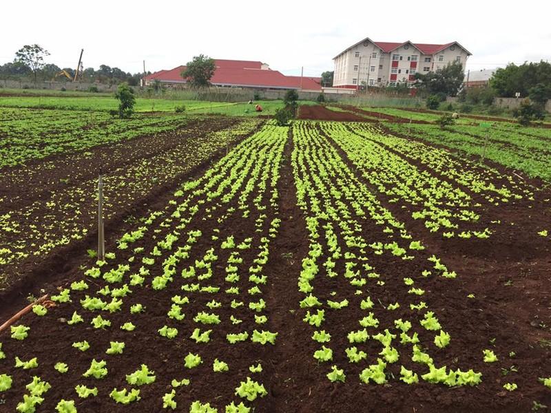 Mang tình yêu nông nghiệp hữu cơ qua đất Việt - ảnh 2