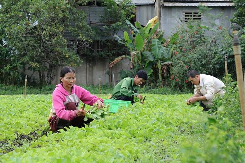 Mang tình yêu nông nghiệp hữu cơ qua đất Việt - ảnh 1