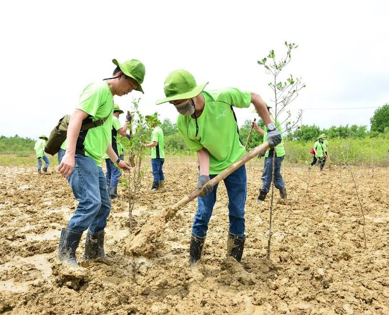 Amway: Làm sạch bãi biển và trồng cây tại Cần Giờ - ảnh 1