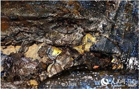 Phát hiện hàng trăm 'bánh vàng' trong mộ cổ hoàng đế bị truất ngôi - ảnh 6