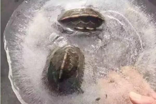 Những hình ảnh lạnh đến 'cắt thịt cắt da' ở Trung Quốc - ảnh 2