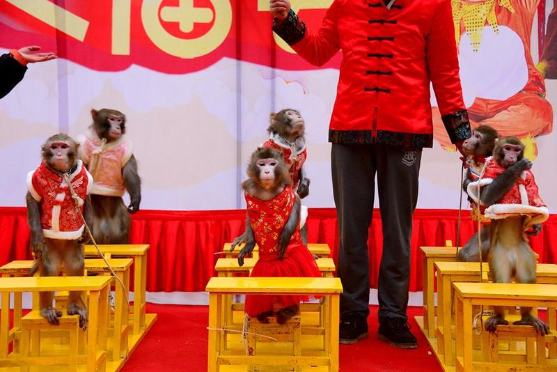 Năm con khỉ, xiếc khỉ lên ngôi - ảnh 10
