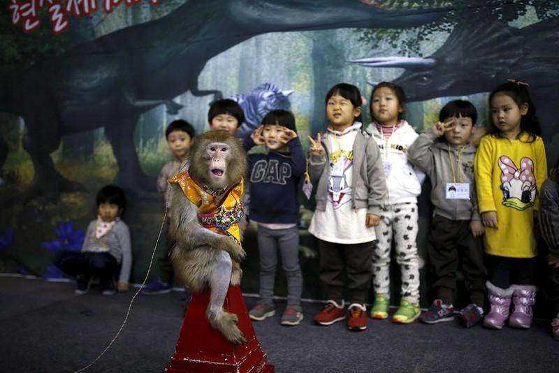 Năm con khỉ, xiếc khỉ lên ngôi - ảnh 14