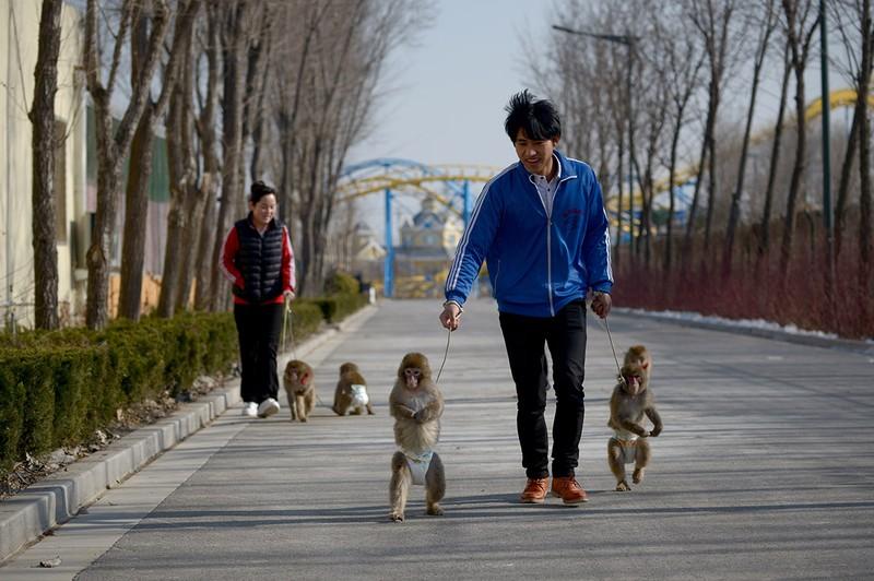 Năm con khỉ, xiếc khỉ lên ngôi - ảnh 6