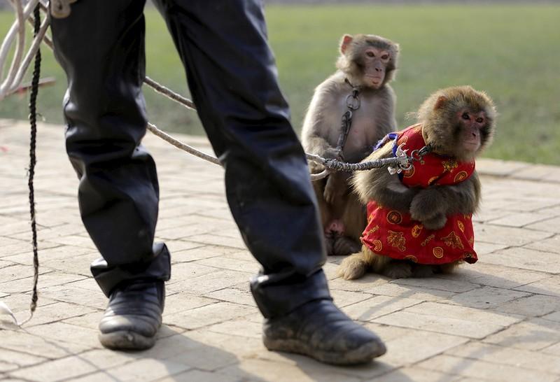 Làng 'tề thiên đại thánh' ở Trung Quốc - ảnh 7