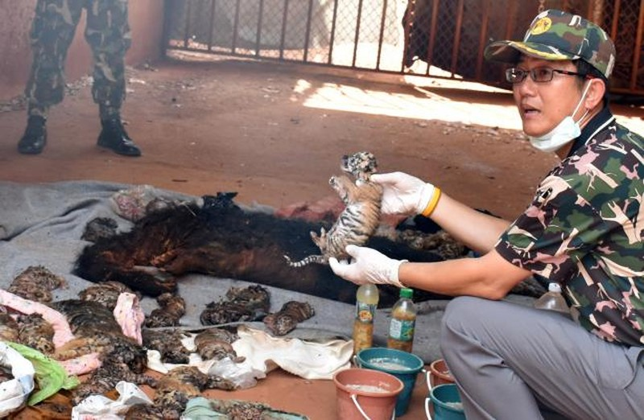 Phát hiện 40 xác hổ con trong ngôi đền nổi tiếng Thái Lan - ảnh 1