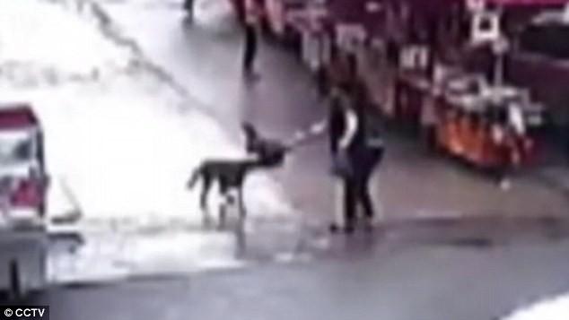 chó dữ tấn công 20 người ở Trung Quốc