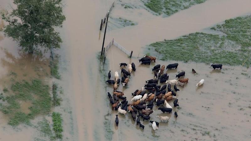 ngập lụt kinh hoàng ở Ấn Độ