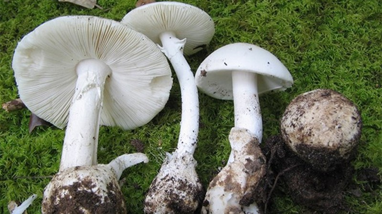 Phòng tránh độc tố tự nhiên trong thực phẩm  - ảnh 1