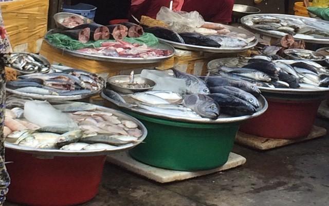 Lý do gì một số loại cá biển gây dị ứng? - ảnh 1