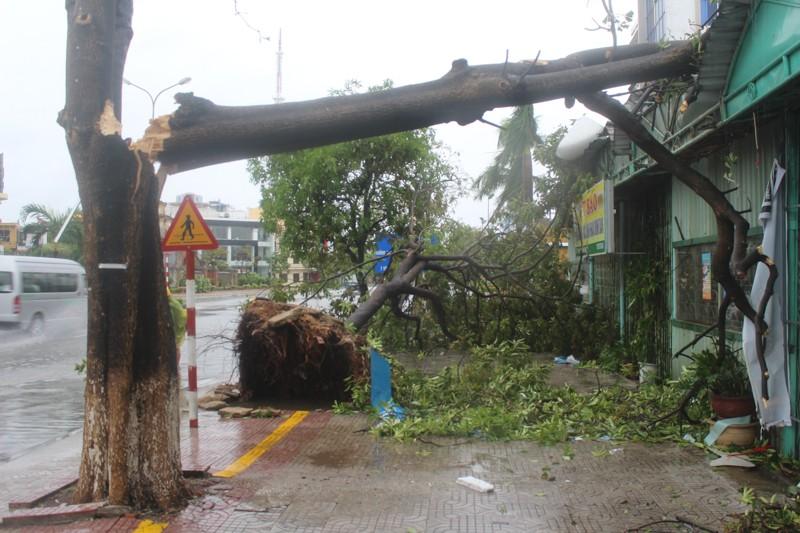 Chùm ảnh: Quảng Bình tan hoang sau bão số 10 - ảnh 1