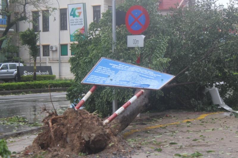 Chùm ảnh: Quảng Bình tan hoang sau bão số 10 - ảnh 8