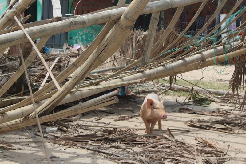 Phóng sự ảnh: Làng biển Quảng Bình xác xơ sau bão - ảnh 9