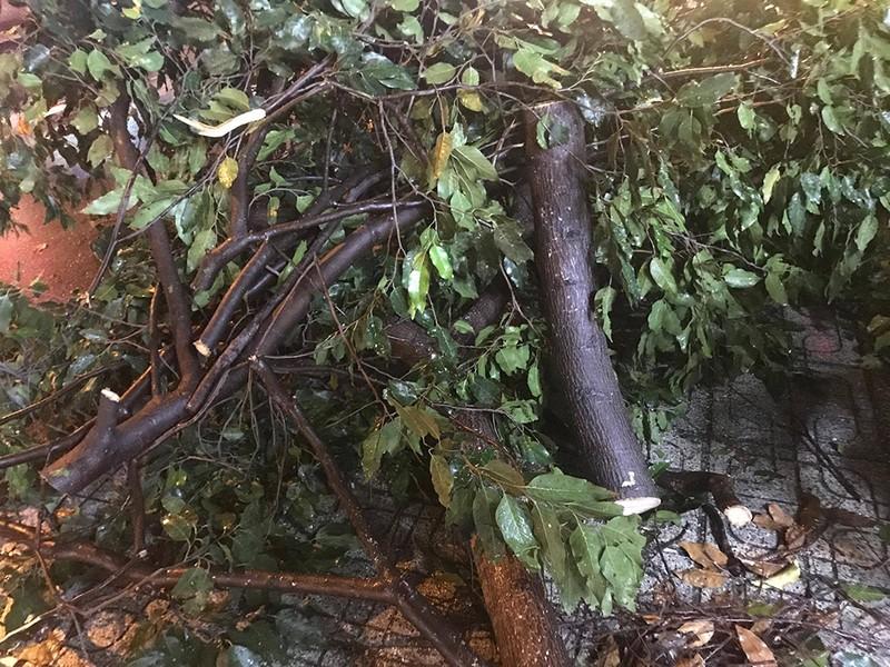 Cây ngã đổ, nhà tốc mái trong cơn giông ở TP.HCM - ảnh 4