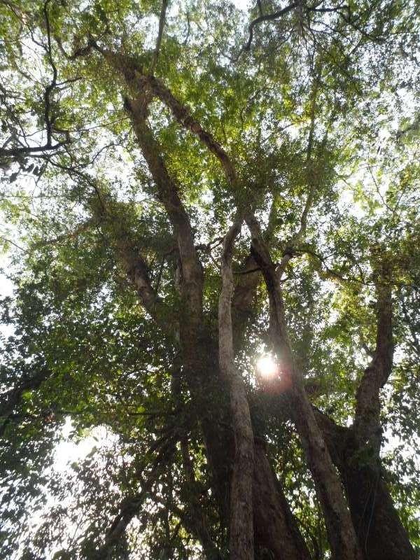 Vào rừng Nam Cát Tiên ngắm cây gõ bác Đồng 700 năm tuổi - ảnh 6