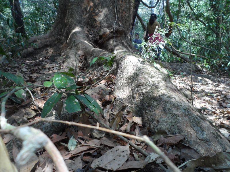Vào rừng Nam Cát Tiên ngắm cây gõ bác Đồng 700 năm tuổi - ảnh 5