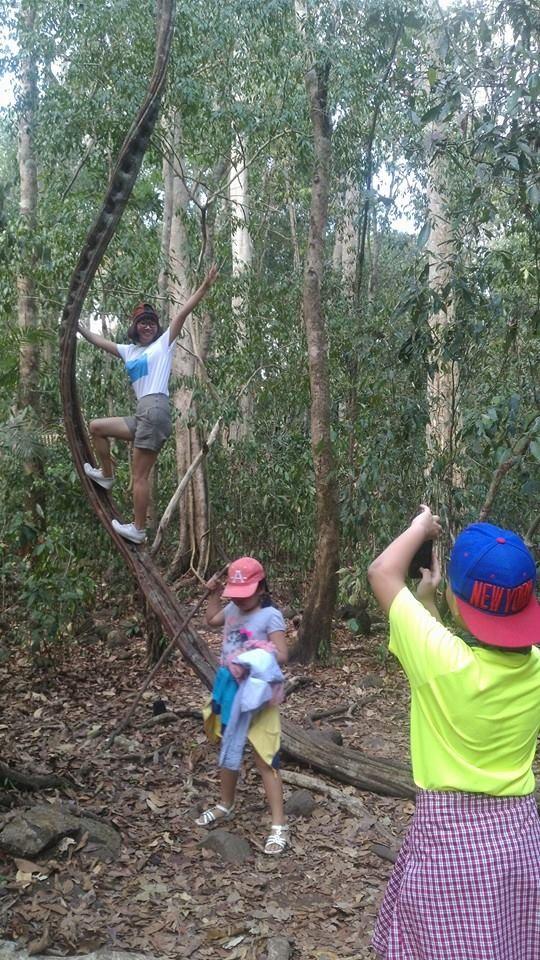 Vào rừng Nam Cát Tiên ngắm cây gõ bác Đồng 700 năm tuổi - ảnh 11