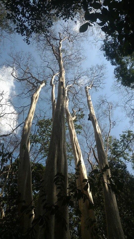Vào rừng Nam Cát Tiên ngắm cây gõ bác Đồng 700 năm tuổi - ảnh 10